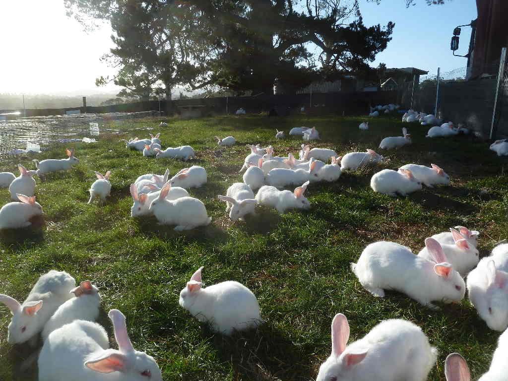 Rabbit Farming Business Plan