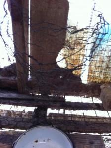 Rabbit Rescue Mary 005