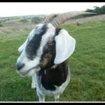 bessie.jpg.opt418x318o0,0s418x318
