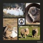 bunny and sheep2.jpg.opt418x418o0,0s418x418
