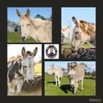 donkey21.jpg.opt418x418o0,0s418x418