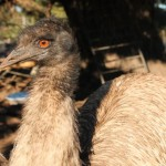 emus5